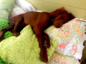 Princess of the pillows